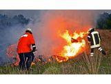 Waldbrandpatsche
